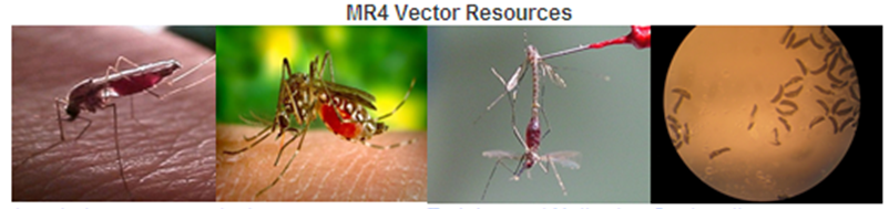 MR4 Vector Resources Link